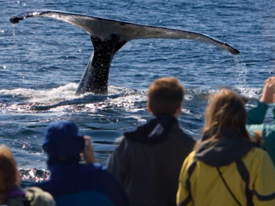 New initiatives for responsible whale watching